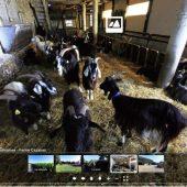 visite 360° chèvres Cazaban